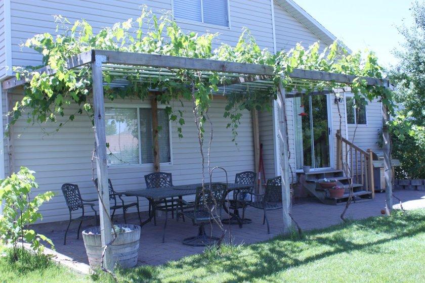 Пергола для винограда как продолжение дома