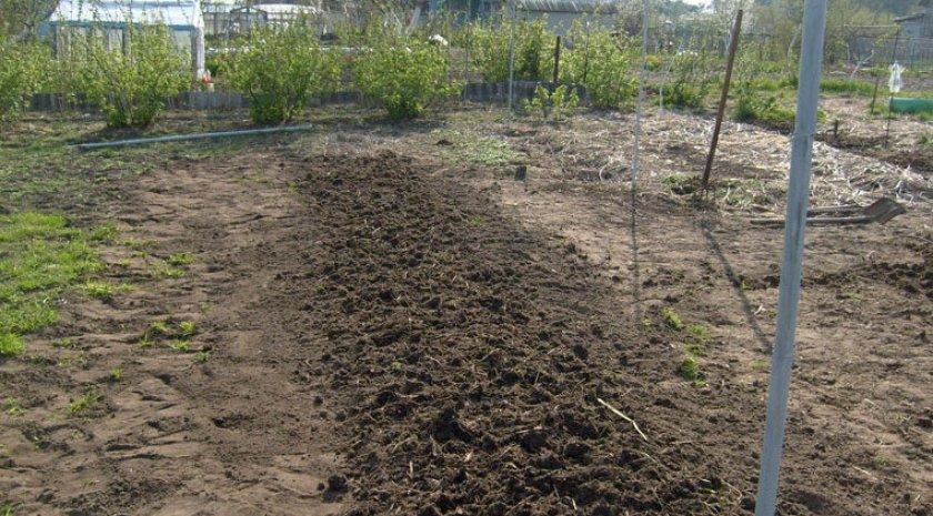 Участок для посадки винограда