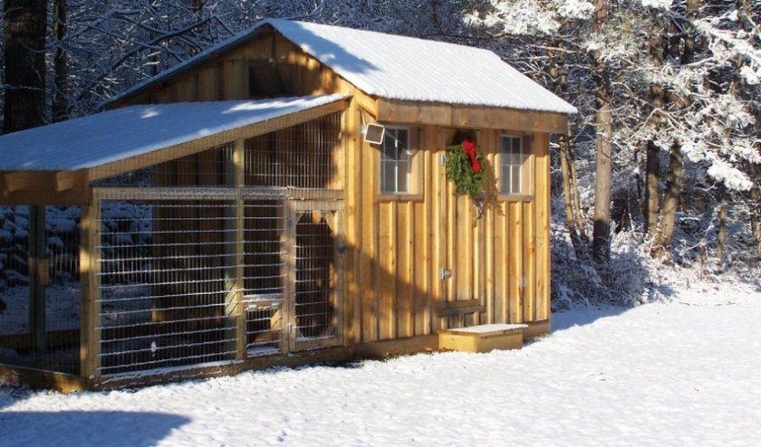 Зимний курятник