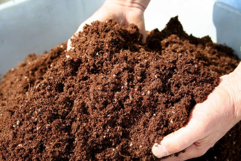 Подготовка грунта для высева