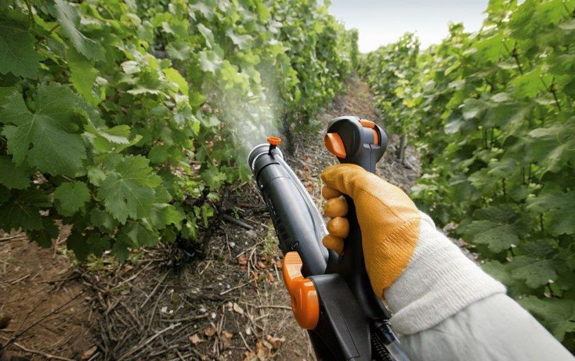 Опрыскивание винограда