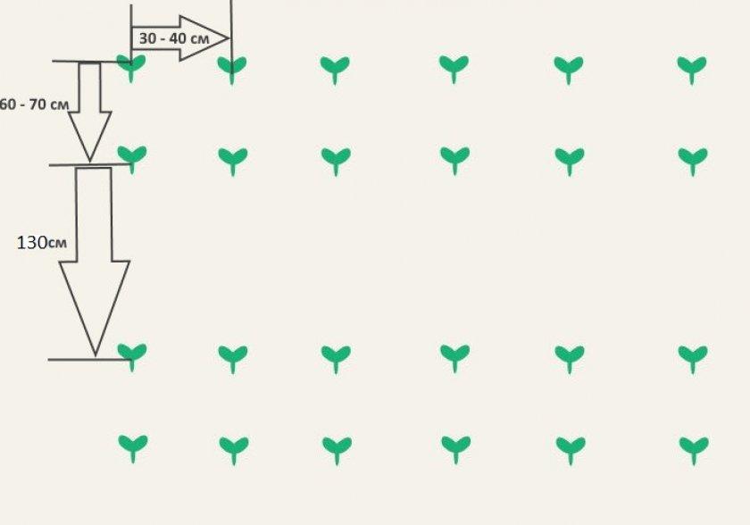 Схема высадки семян в открытый грунт