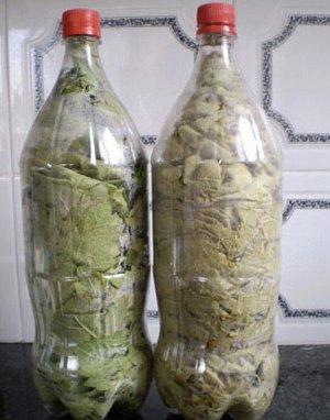 Хранение листьев долмы в бутылке