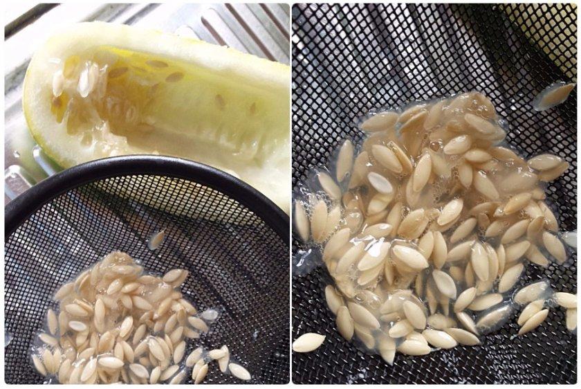 Процесс получения семян
