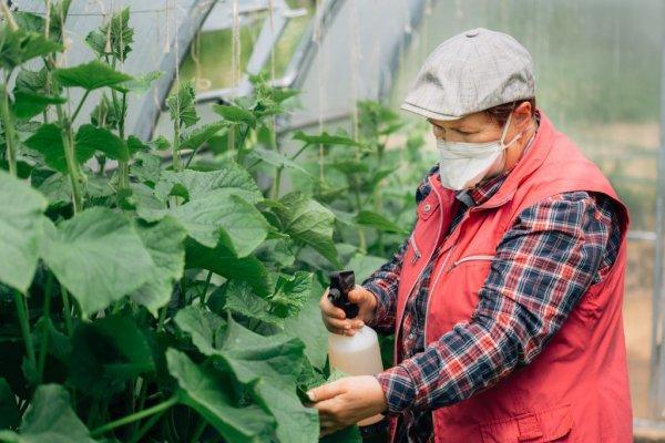 Как и чем подкормить огурцы в период плодоношения для увеличения урожая в два раза