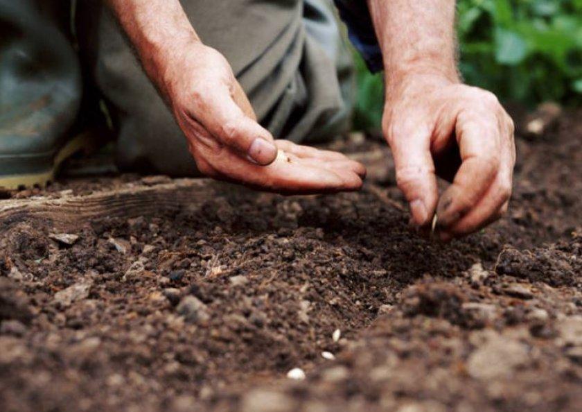 Высадка семенного материала