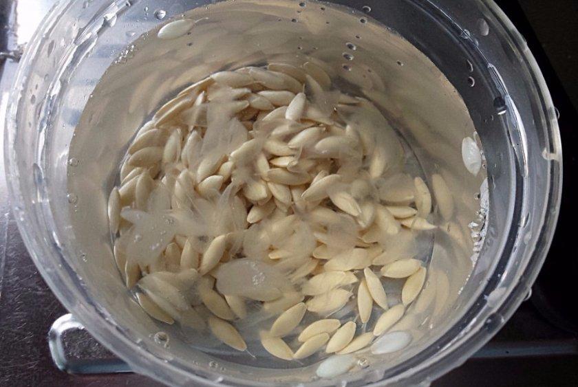 Вымачивания семечек огурца