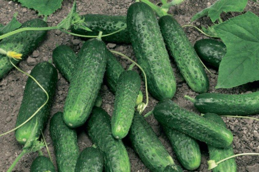 Особенности сбора и хранения урожая
