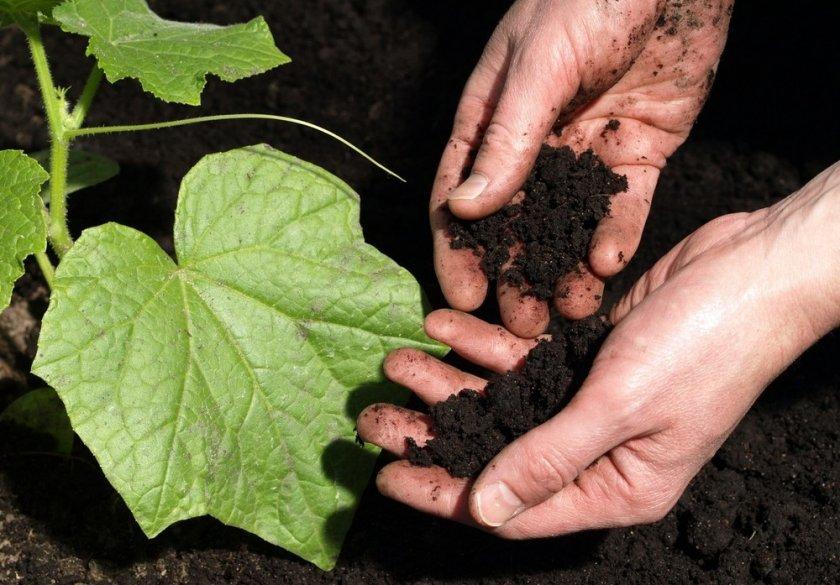 Состав почвы для огурцов в теплице