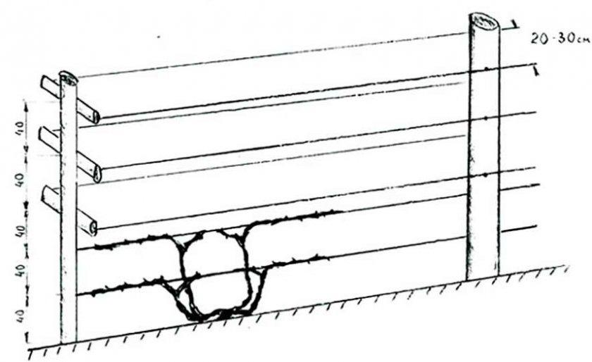 Схема подвязки на одноплоскостную шпалеру