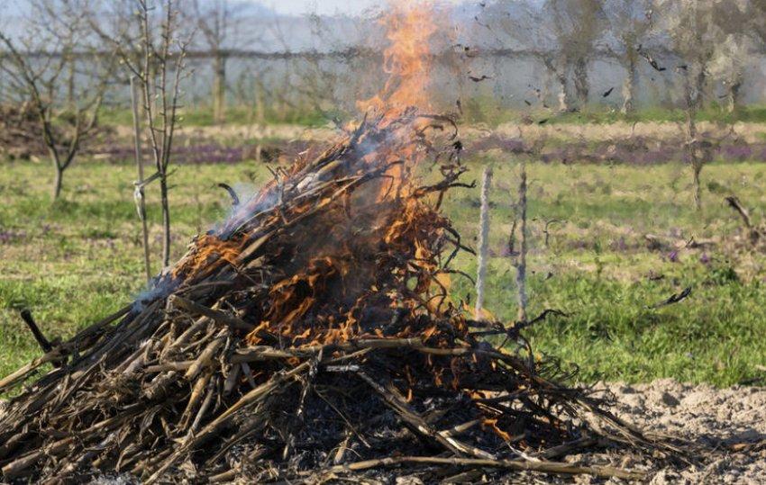 Сжигание картофельной ботвы