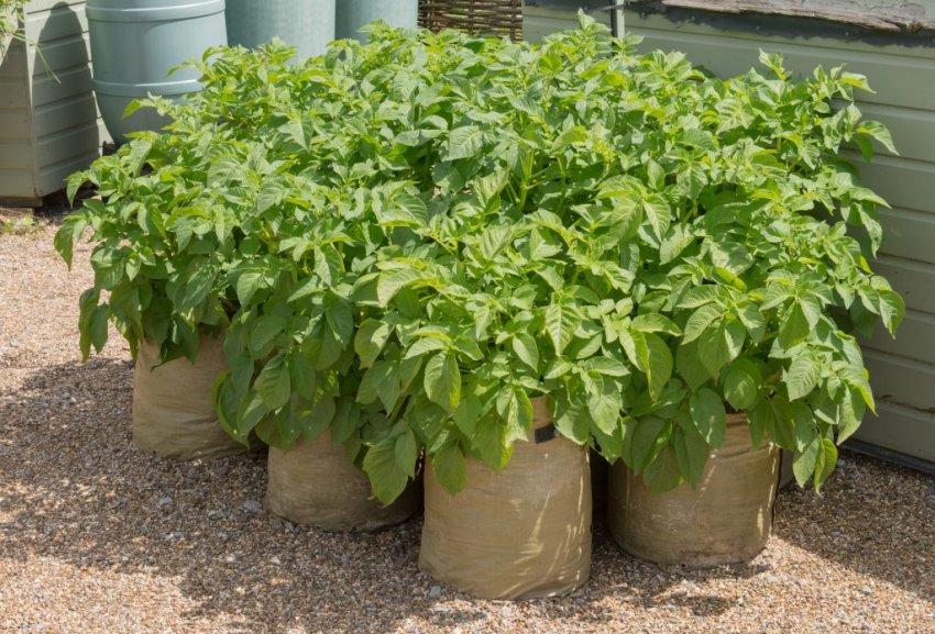 Оптимальные условия для выращивания