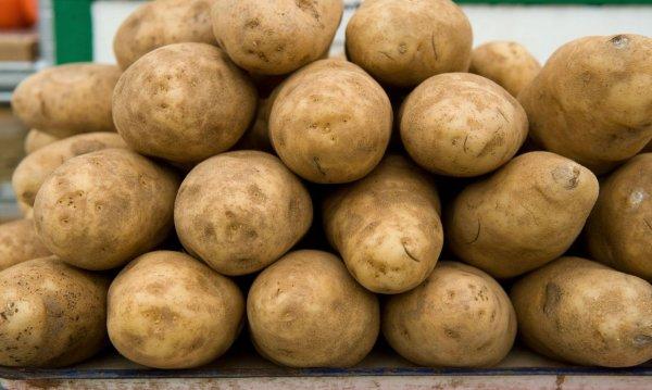 Картофель сорт каратоп описание сорта
