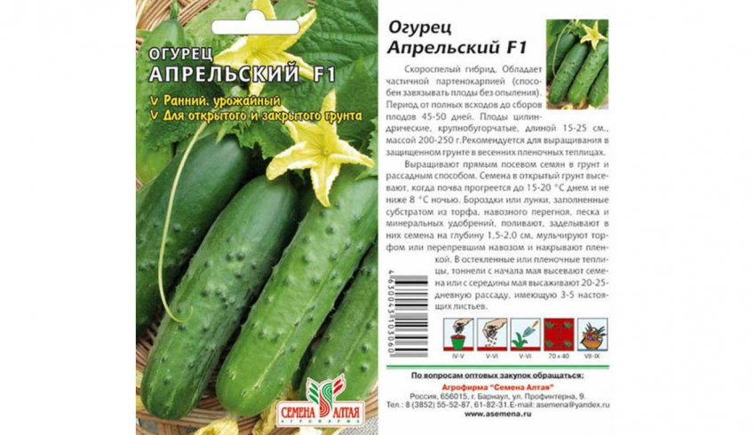 Сорт огурцов апрельский