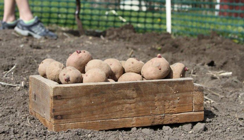 Подготовка картофеля