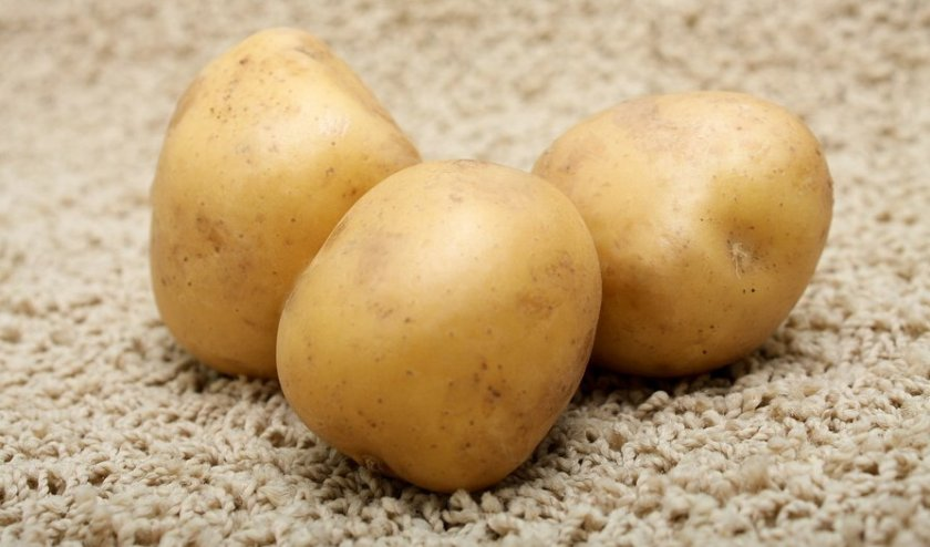 Картофель сорта аксамит