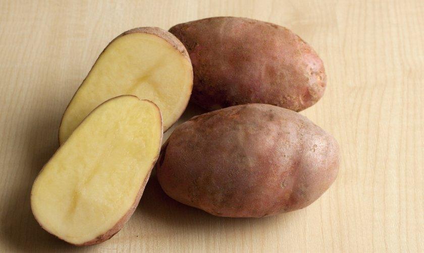Картофель сорта здабытак