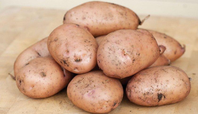 Картофель сорта зарница