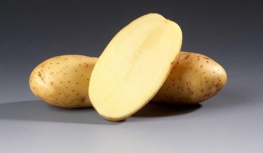 Картофель сорта ветразь