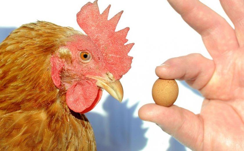 Куриное яйцо третьей категории