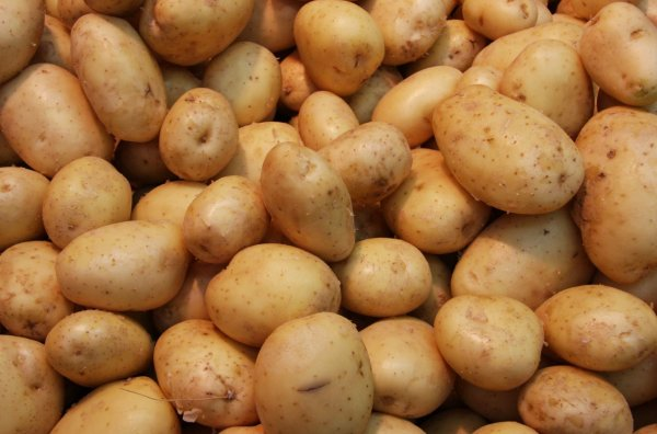 Раннеспелый желтый картофель Гала