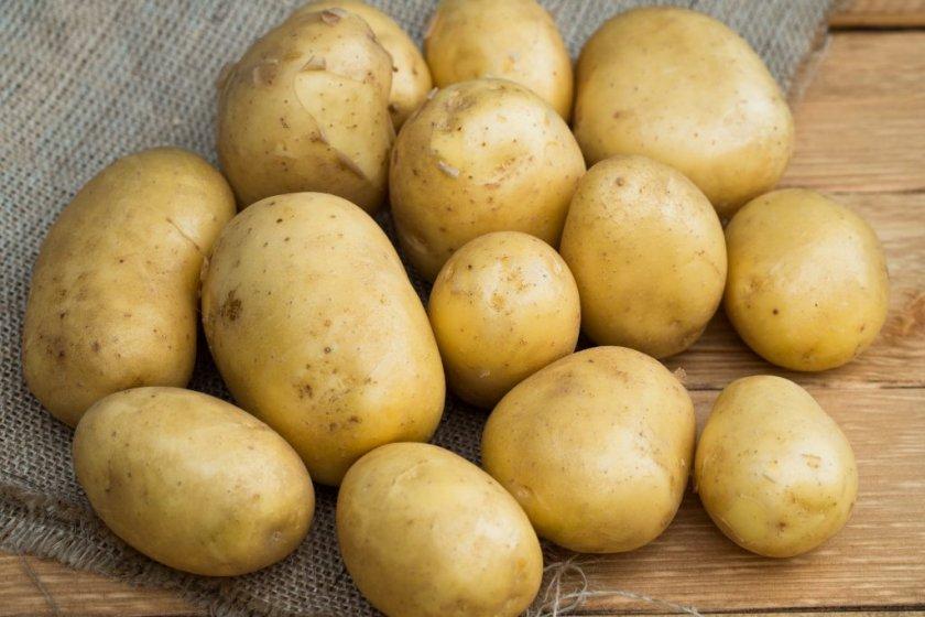 Посадка и выращивание сорта картофеля