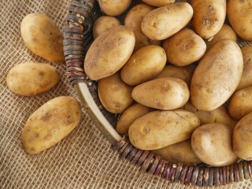 Возможные ошибки при хранении картофеля