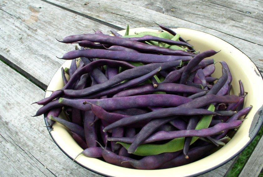 Фиолетовая фасоль