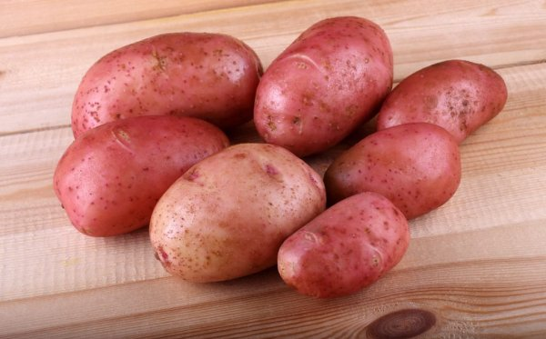 Картофель Рокко: описание и характеристика сорта, урожайность с фото