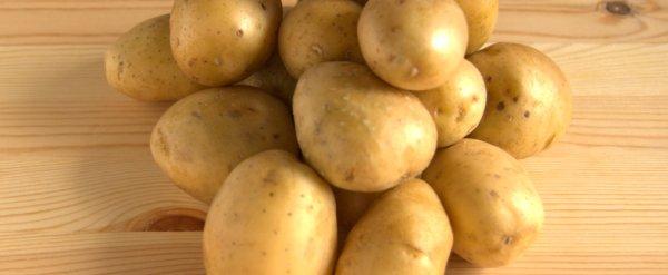 Особенности сорта картофеля Импала и технология выращивания