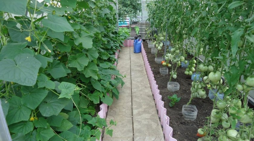 Полив огурцов и томатов