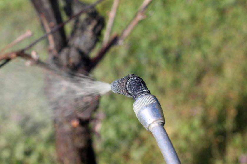 Чем опрыскивать виноград весной