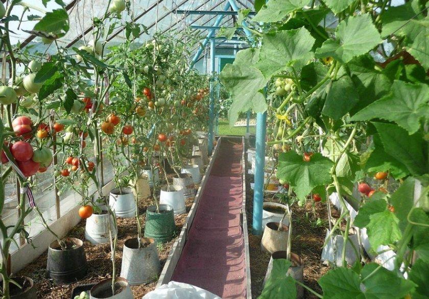 Подвязка огурцов и томатов теплице