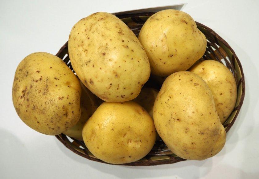 сорта картофеля фото описание очень разваристый так было