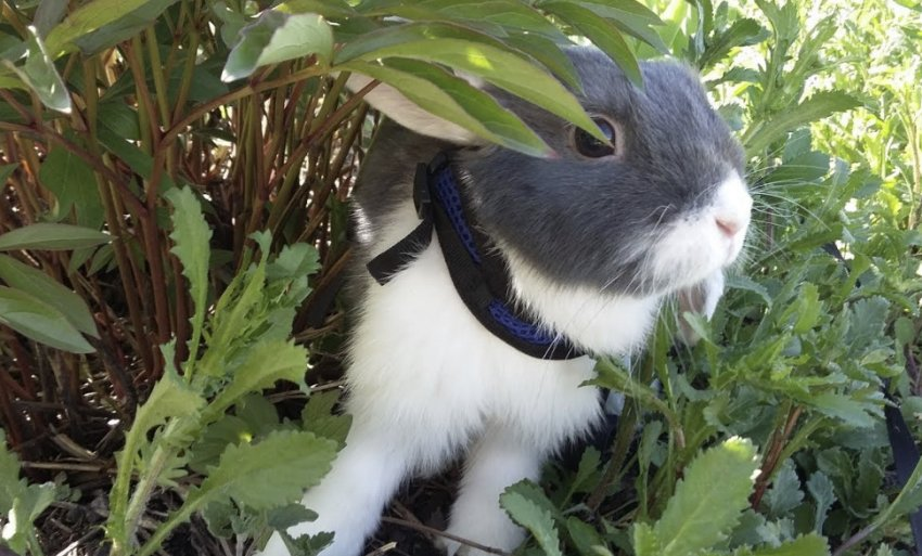 Кролик в саду