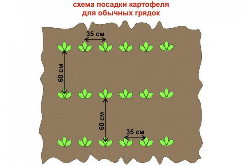 Схема посадка картофеля