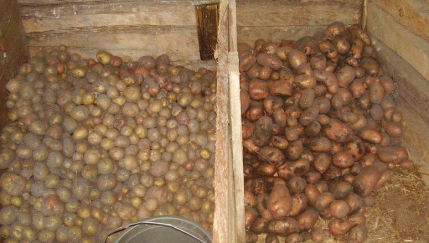 Хранения картофеля