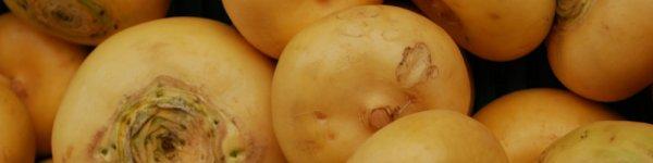 Польза и вред репы для организма человека