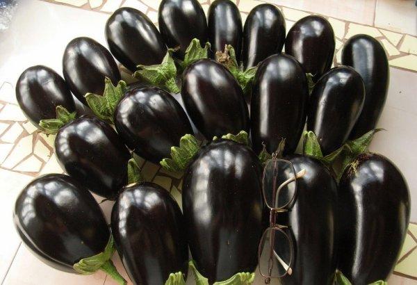 Баклажан Щелкунчик: описание и характеристика сорта, особенности выращивания, фото