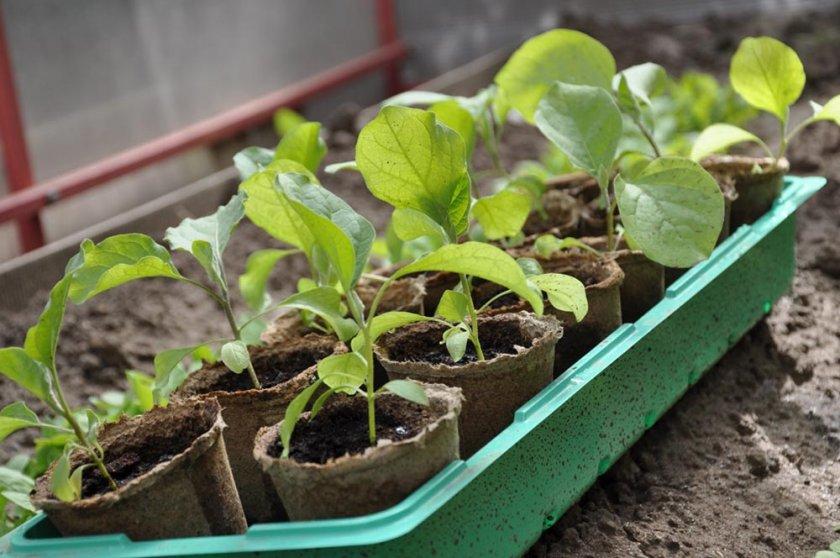 Ёмкости для выращивания