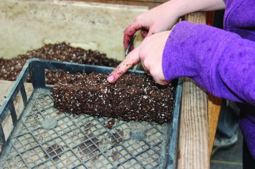 Почва и ёмкость