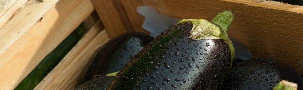 Как часто поливать баклажаны в открытом грунте, чем поливать