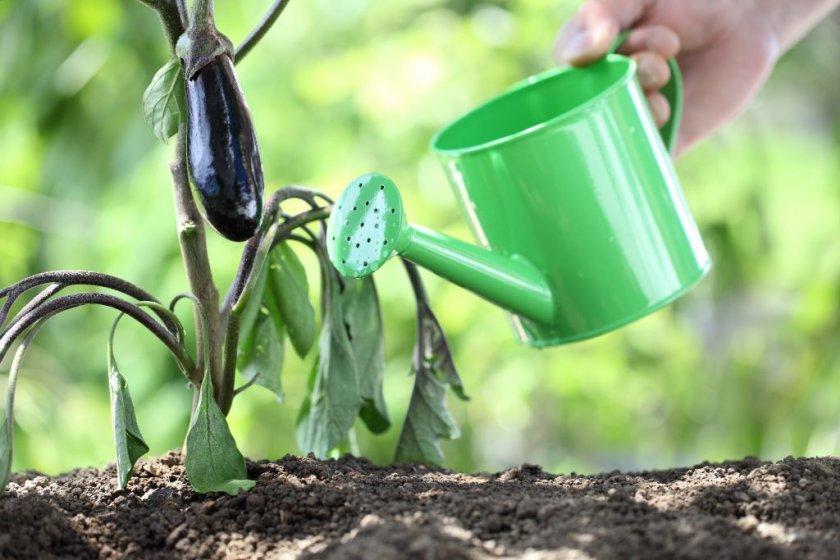 ход за растением