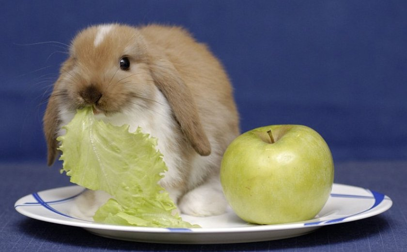 Яблоки для кролика