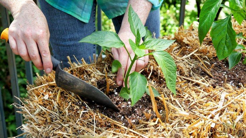 Рыхление и мульчирование почвы