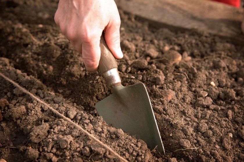Подготовка семян и почвы