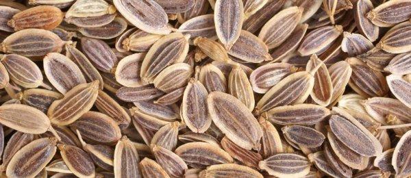 Семена укропа при панкреатите отзывы