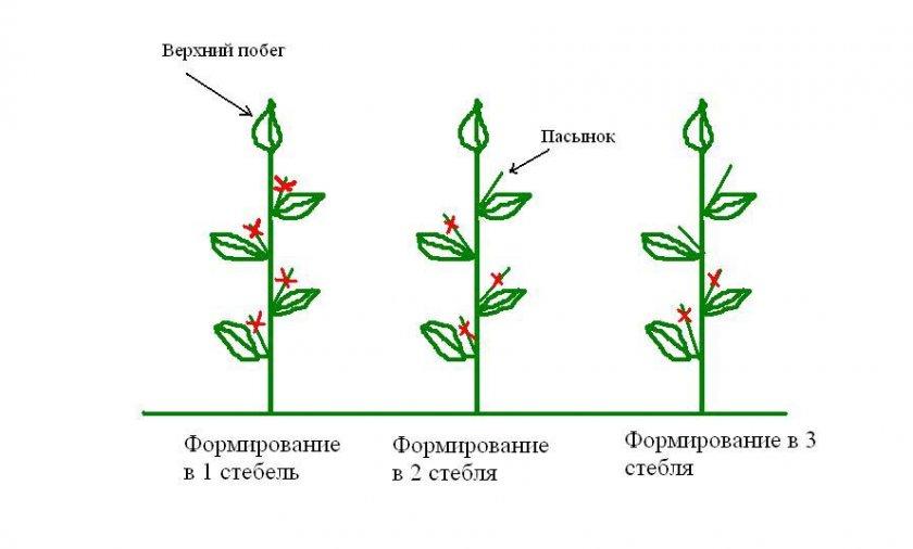Схема пасынкования перцев