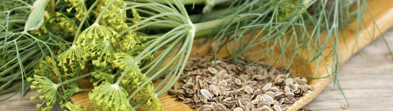 как быстро прорастить семена зелени