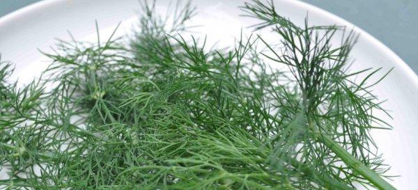Укроп для похудения - применение семян и зелени укропа